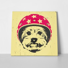 Dog yorkshire terrier helmet 645192025 a