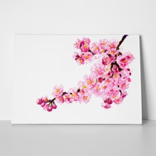 Pastel pink cherry blossoms 227074234 a