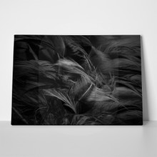 Black feather wool a