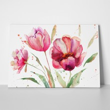 Three tulips flowers watercolor illustration 118123285 a