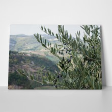 Autumn olive tree 336625109 a