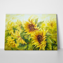Bright sunflowers a