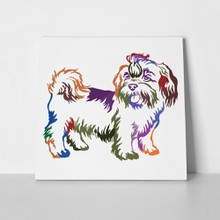 Shih tzu dog colors 684457378 a