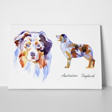 Watercolor australian shepherd dog 2 688160278 a