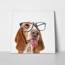 Basset hound funny 339156026 a