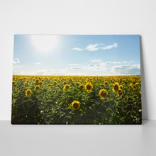 Backdrop beautiful sunflowers garden 1037578720 a