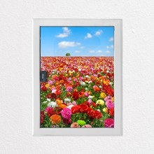 Flower meadow a