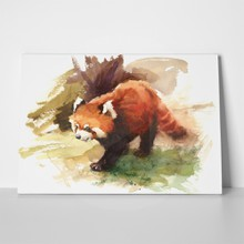 Red panda watercolor painting 276728963 a