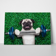 Pug dog dumbell bar