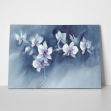 White orchid flowers on dark blue 1017850069 a