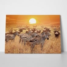 African wildlife sunset 5 a