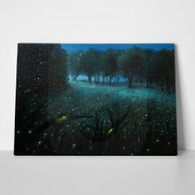 Fireflies meadow front