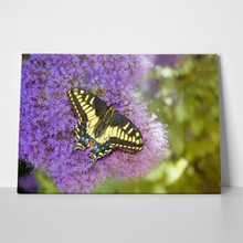 Butterfly on purple allium 637608571 a