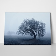 Olive tree in october shrouded by the fog