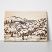 Old olive grove landscape 559580191 a