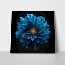 Dark chrome blue dahlia 315501374 a