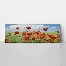 Poppies and clouds 318134624 a