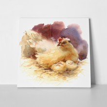 Watercolor farm bird mother chicken 365303672 a