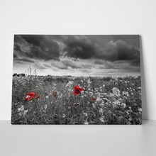Black white field poppies 79357105 a