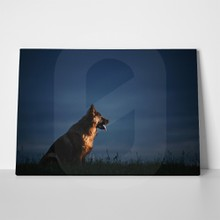 German shepherd sitting night 475816903 a