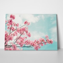 Beautiful cherry blossom sakura spring time 609858479 a
