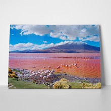 Flamingos in bolivia 379714459 a
