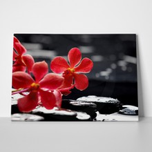Red orchid on pebbles