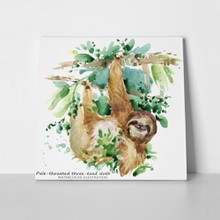 Sloth tropical animal watercolor 790342654 a