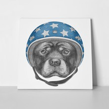 Dog rottweiler helmet hand drawn illustration 552305428 a