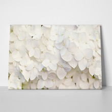 White hydrangea floral background 206510209 a
