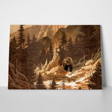 Brown bear rocky mountains 889640 a