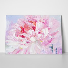 Pink peony flower a