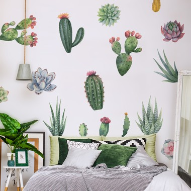 Cacti and succulent plants web