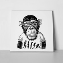 Theory evolution monkey 634658750 a