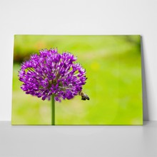 Bee flying to allium 1009261819 a