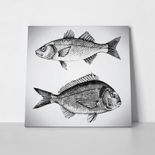 Fishes beautiful hand drawn 291689006 a