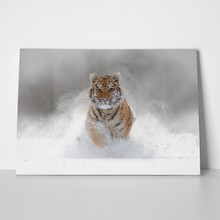 Tiger in snow 551809147 a