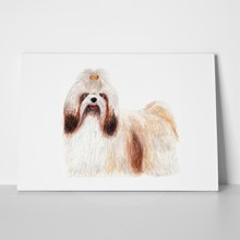 Shih tzu long hair dog 1027301365 a