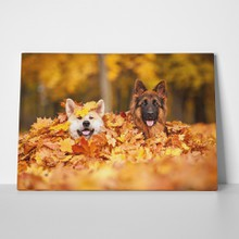 Two dogs in leaves