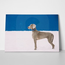 Beautiful weimaraner in snow 673189621 a
