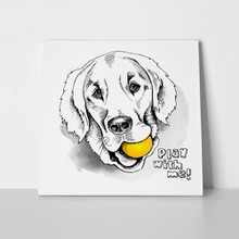 Labrador retriever portrait ball 363529472 a