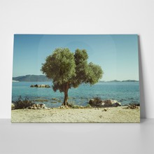 Mediterranean sea olive tree 192135950 a