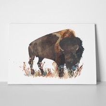 Buffalo bull wild animal watercolor 270056645 a