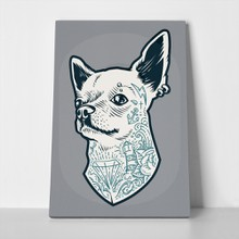 Tattooed chihuahua dog 611677793 a