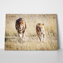 Pair of lions 698145445 a