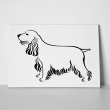 Cocker spaniel white background 604603715 a