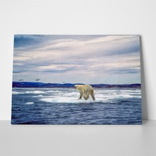 Polar bear on ice 185917268 a