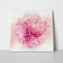 Pink asters and chrysanthemums 786609442 a