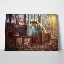 Wild bear watching tv 173501084 a