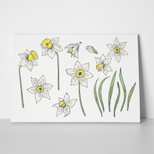 Daffodil flower elements isolated 1043894119 a